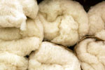 Natural cotton in batts